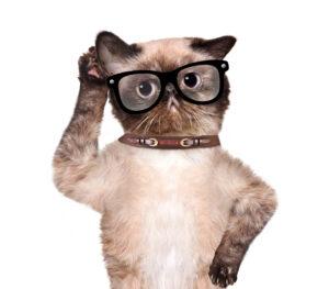 bigstock silly cat listening careful wi 112187738