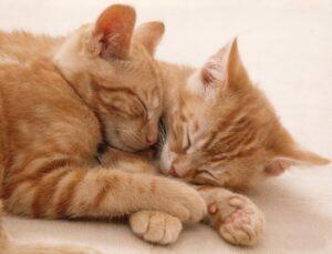 dive mačke