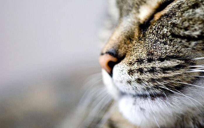 mačji feromoni