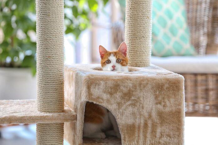 grebalica za mačke