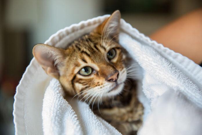 Kako okupati mačku
