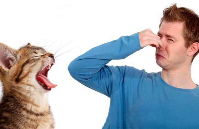 loš zadah kod macke