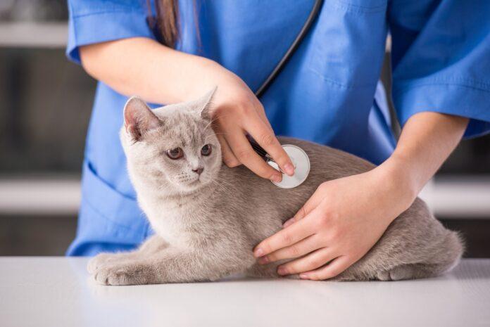 boljesti mačaka