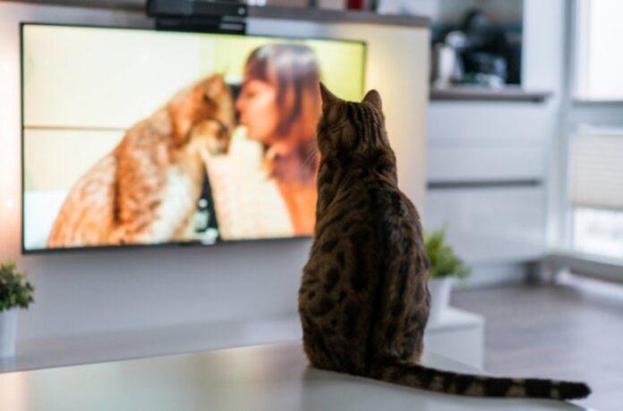 mačka gleda TV
