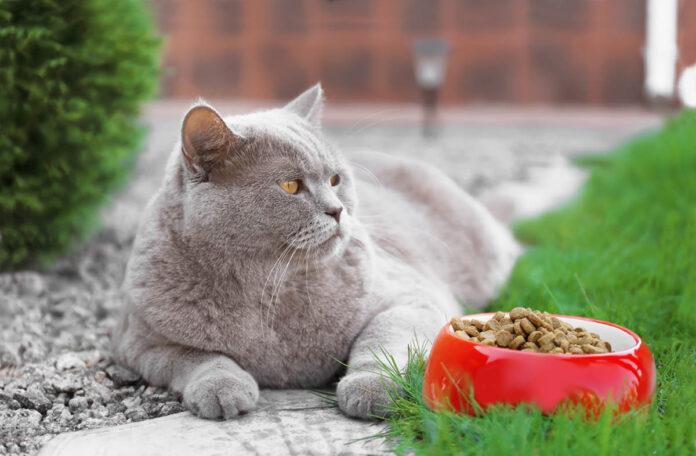 Mačka ne jede