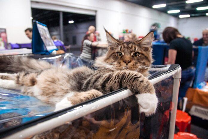 Izložba mačaka